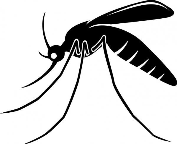 Wozu sind Mücken gut?