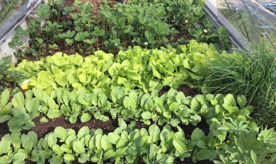 Zuhause im Gemüseparadies