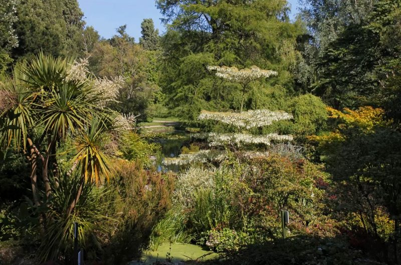 KANALINSELN – Blumenparadies im Atlantik (Teil 2 von 2)